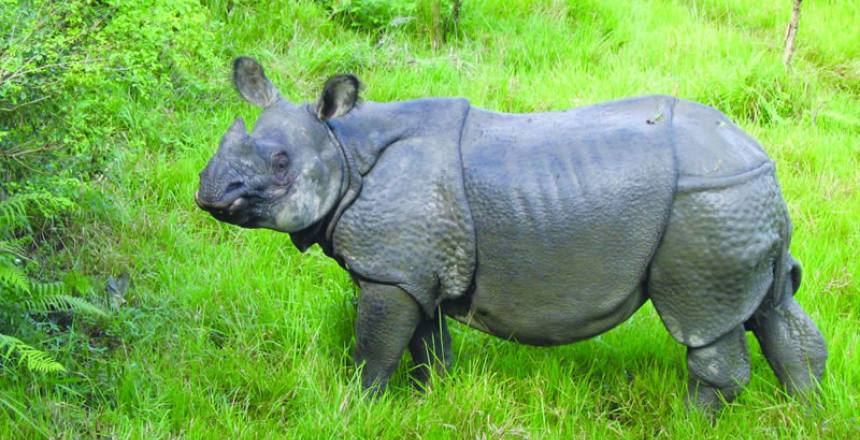 Nepal holiday tour with wildlife safari